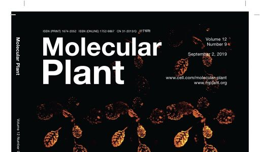Nature's cinema: New technique allows plant imaging in real-time