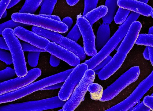 Are Gut Microbes the Key to Unlocking Anxiety?