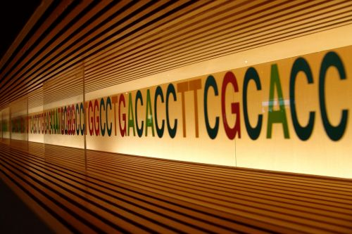 Emendo Eyes the Clinic for CRISPR Therapy That Makes Single-Gene Edits