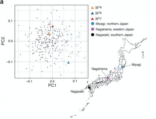 PacBio Sequencing Contributes to New Japanese Reference Genome
