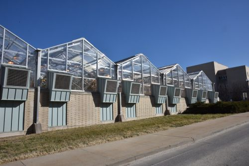 Turning Winter into Summer: How Greenhouses Work in the Winter