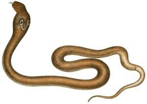 "When Snakes Strike: SMRT Sequencing Reveals Hidden ""Venom-ome"""
