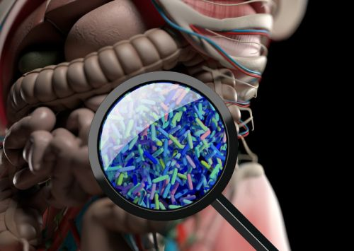 Investors Go With Gut Ahead of Microbiome Therapy Boom, Says Seventure