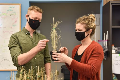 BIPS: Bringing Plant Science and Engineering Together