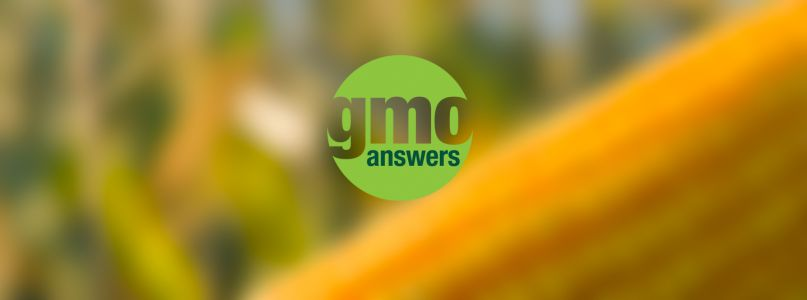 GMO Labels: What You Need to Know