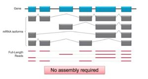 Webinar Summary: Need accurate isoform-level characterization? Iso-Seq is the answer