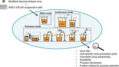 Production of Modified Vaccinia Ankara Virus by Intensified Cell Cultures: A Comparison of Platform Technologies for Viral Vector Production