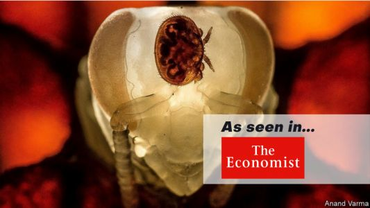 The Economist: RNA for Bees and Crops