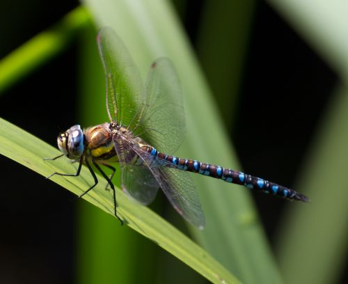 Celgene Doubles Down on Dragonfly, Pays $50M to Expand Cancer Pact